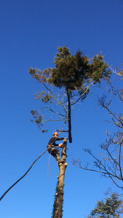 tree services west hill