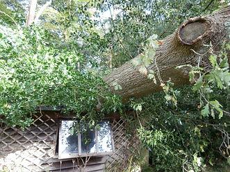 Emergency 24hr tree surgeon | Sidmouth, East Devon