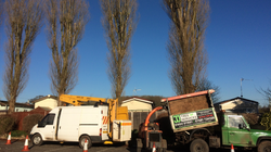 tree services exeter