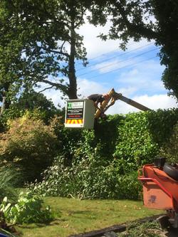 tree work ottery st mary devon