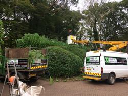 JJ tree services east devon