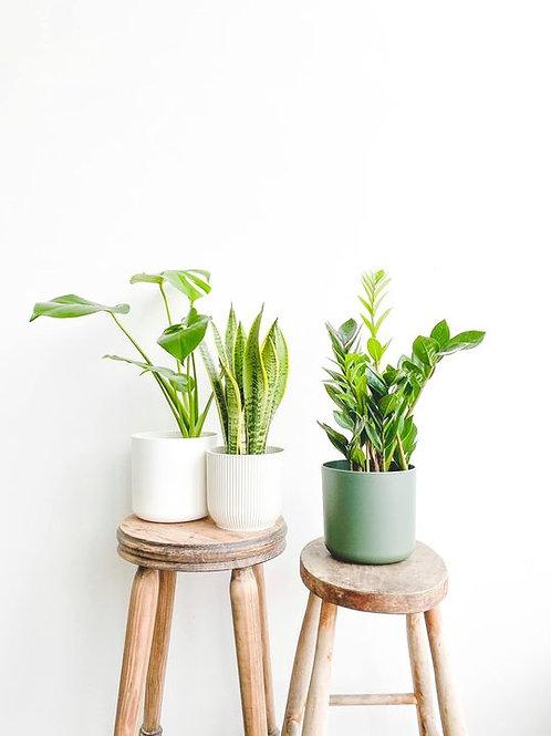 Mystery Beginner Plant Bundle - Small