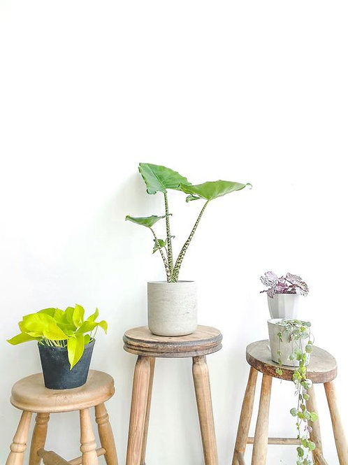 Mystery Plant Bundle - Small