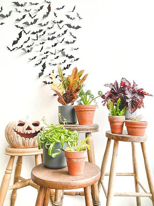 Halloween Plant Bundle