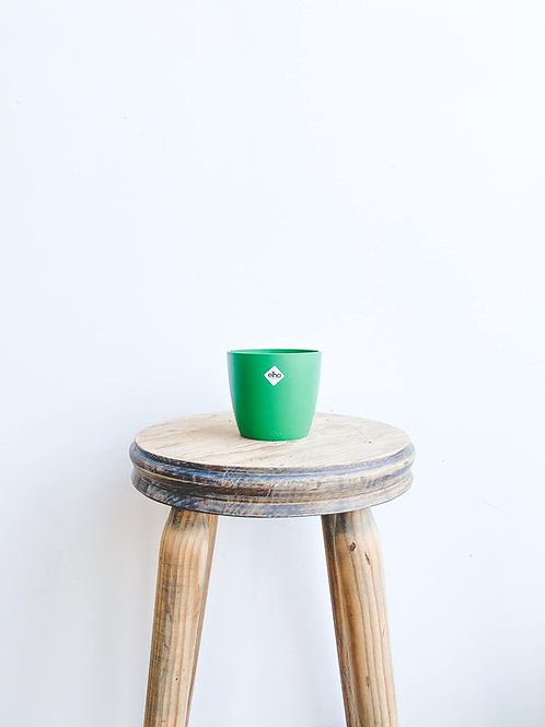 elho Brussels Mini Pot - Lucky Green