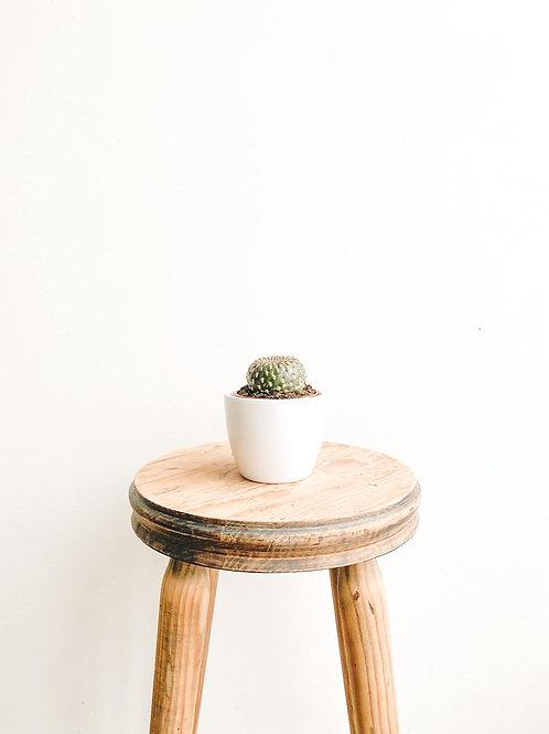 Adrian, Sulkorebutia Arencea Cactus