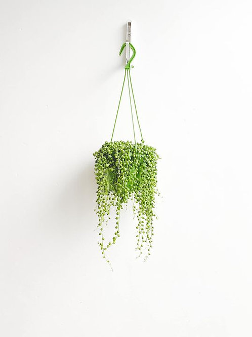 Percival, String of Pearls - Large
