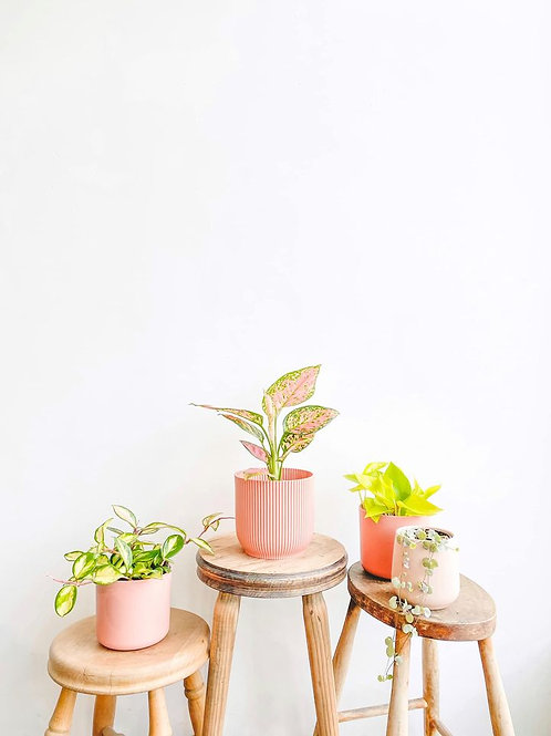 Mother's Day Plant Bundle
