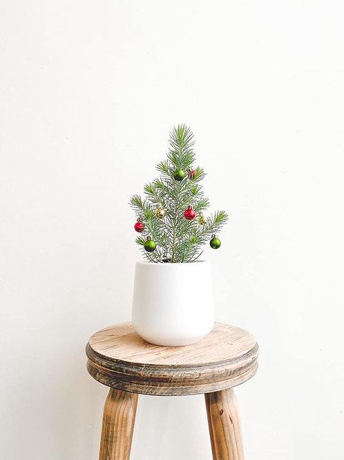 Nicholas, Baby Christmas Tree