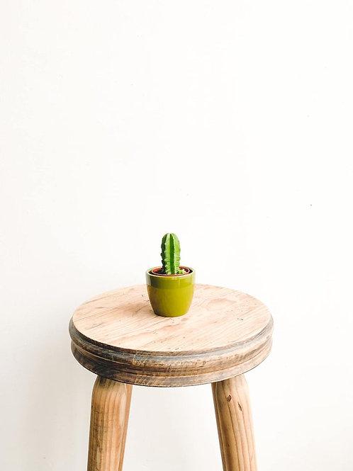 Moriarty, Echinocereus Morricalii Cactus