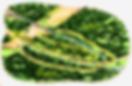 arboretum_planol.png