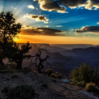 Grand Canyon Sunset through the Tree