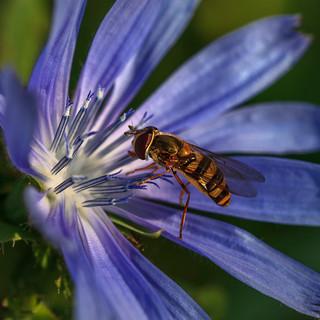 The Plant Pollinator