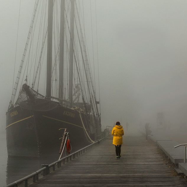 Yellow Jacket in The Fog