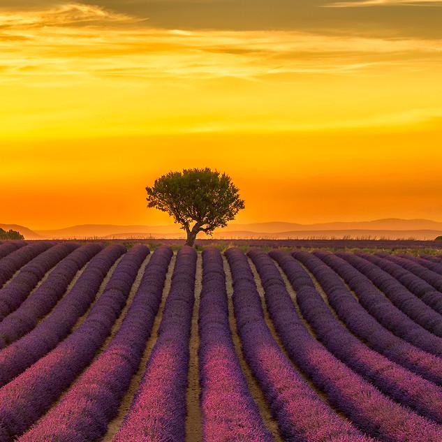 Evening Splendor, Provence.jpg