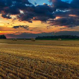 Sunrise over a Hayfield