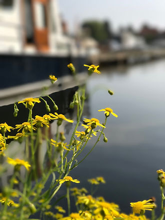 bloemetje waterkant 2.jpg