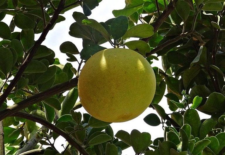 fruit-1760925_640.jpg