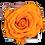 Thumbnail: 1 Eternal Rose -  Vibrant Orange - White square Box