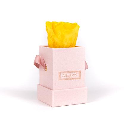1 Eternal Rose Golden Yellow - Powder Pink square Box