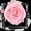 Thumbnail: 1 Rose Eternelle Rose Tendre - Box carrée Noire