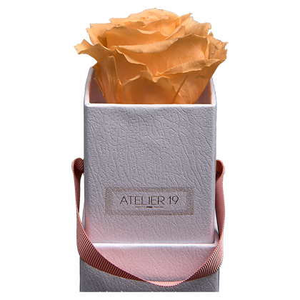 1 Eternal Rose - Velvety Peach - White square Box