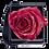 Thumbnail: 1 Rose Eternelle Rouge Pailleté - Box carrée Noire