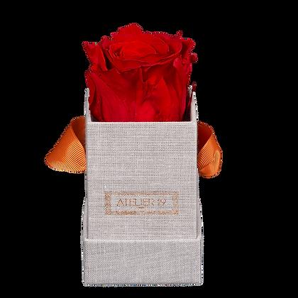 1 Rose Eternelle Rouge Passion - Box carrée Grise