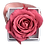 Thumbnail: 1 Rose Eternelle Bois de Rose - Box carrée Rose Poudré