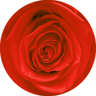 Roses éternelles rouges – Atelier 19