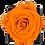 Thumbnail: 1 Rose Eternelle Orange Vibrant - Box carrée Noire