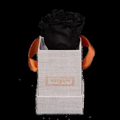 1 Rose Eternelle Noir Profond - Box carrée Grise