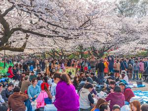 Hanami, la fête qui célèbre le printemps dans la poésie !