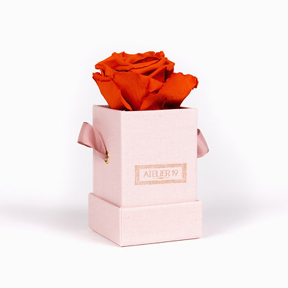 1 Rose Eternelle Orange Vibrant - Box carrée Rose Poudré