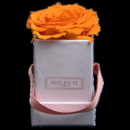 1 Rose Eternelle Orange Vibrant - Box carrée Blanche
