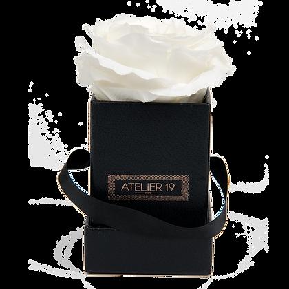 1 Rose Eternelle Blanc Pur - Box carrée Noire