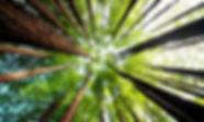 shutterstock_582160657.jpg