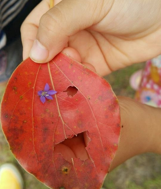 葉っぱで顔作ったよ♪
