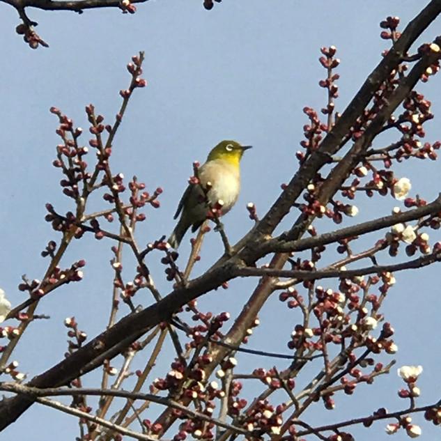 春ですね…♪.JPG