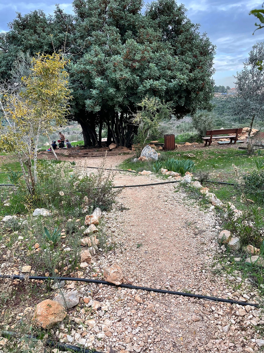 A gravel path leading to the Ein Shir pool