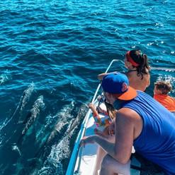 dolphin-and-whale-watching-tour-in-playa-garza-nosara-costa-rica-viberts-secret-spot
