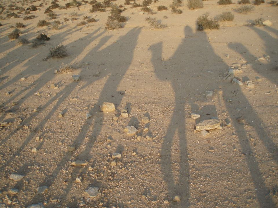 The shadows of a row of camels in the desert