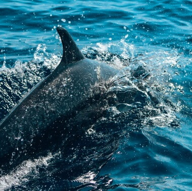 spotted-dolphins-on-a-dolphin-and-whale-watching-tour-in-playa-garza-nosara-costa-rica-viberts-secret-spot