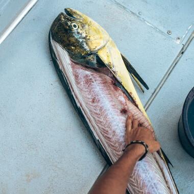 catching-mahi-mahi-on-a-fishing-trip-in-playa-garza-nosara-costa-rica-viberts-secret-spot