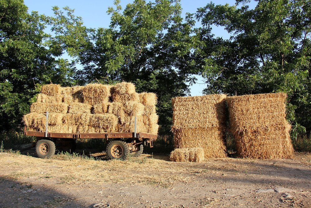 Bales of hay on a kibbutz stacked on a wagon and on the ground
