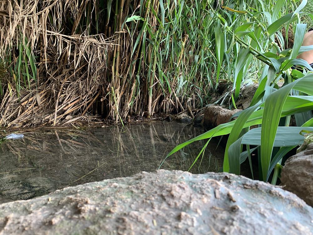 Part of the Ein Varda pool