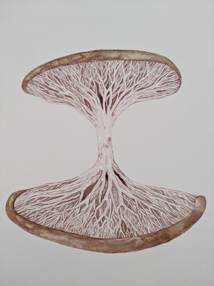 Natures hourglass.jpg