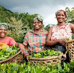 women farming professionals.jpg