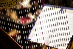 Harp strings closeup.jpg