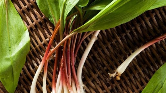 May Cooking Class - Spring Foraging
